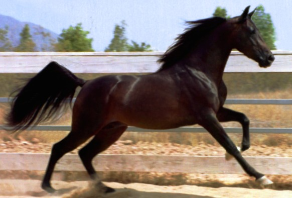 conformation of horses essay Compare horse: thoroughbred vs american quarter horse detailed info on temperament, size, health, breed type, life span, and more side by side.