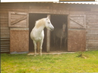 Bess and Kitty in the stables