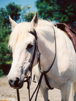 A sweet natured mare