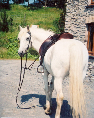 posing for her photo in English tack