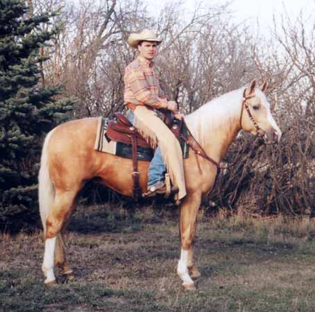 photo of palomino stallion Cook N Oak