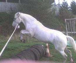 Bess jumping on lunge