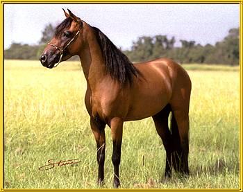 Caspian stallion Da Dan