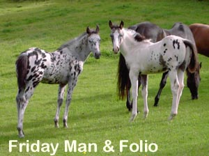 Friday Man and Folio
