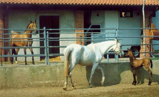 Olga with her dam Olimpia and her sire Muzar