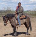 Grullo Quarter Horse Stallion Hollywood's Blue King