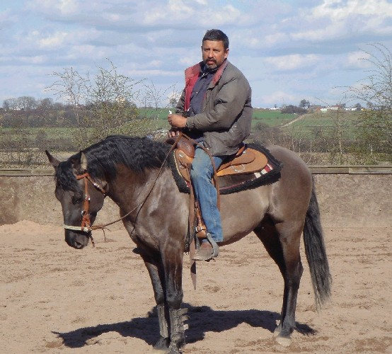 Hollywoods Blue King, a grullo stallion with rare Foundation bloodlines
