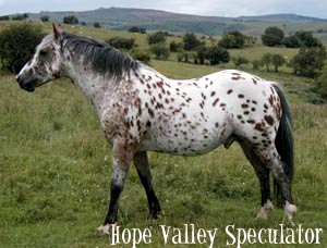 Hope Valley Speculator