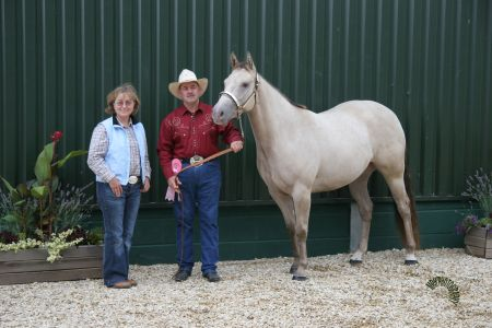 Misty, a classic champagne American Quarter Horse mare