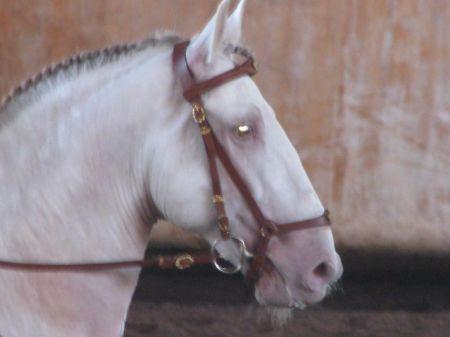 Pearl horse Xuxu