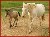 Della and foal