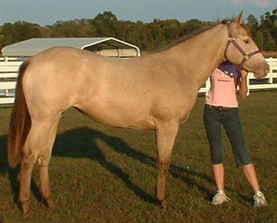 Kya, a sable cream QH