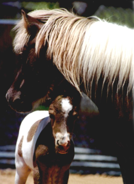 flaxen chestnut mare with her red and white paint foal