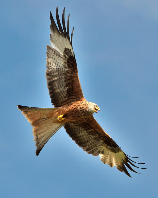 The area is famous for the Red Kites which can be seen over the property daily