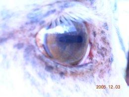 Gold cream AQH eye and mottled skin