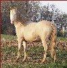 Della in foal to Cocoa