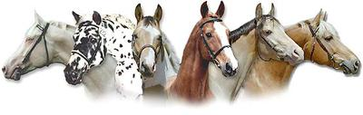 Falkenhorst stallions