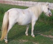 red roan sabino mare